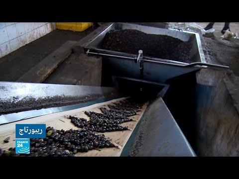 ليبيا تحتل المرتبة 11 عالميا في إنتاج الزيتون بحسب منظمة -فاو-  - نشر قبل 21 ساعة