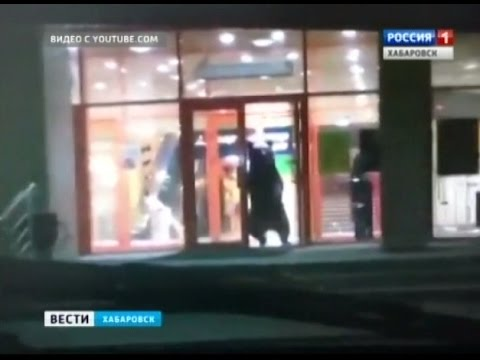 Вести-Хабаровск. Медведь в городе