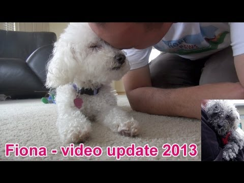 Fiona the blind dog - new video update 2013