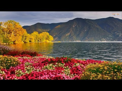 Beautiful Flowers Around The Lake