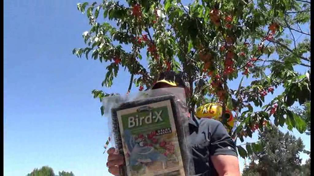 How To Keep Birds Off Your Fruit Trees