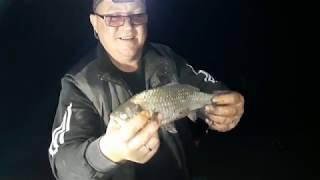 Ночная рыбалка на платном водоёме!