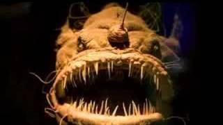 Top 10 najohydniejszych żyjących ryb! | Top Ten Ugly Fish