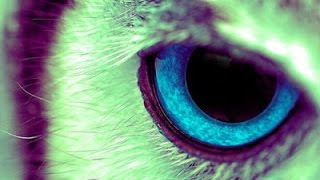 Repeat youtube video ✔ Qué Animal Eres De Acuerdo A Tu Fecha De Nacimiento | Gleizzzer 4K