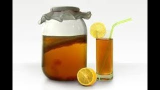 Чайный китайский маньчжурский гриб камбуча эликсир здоровья и бессмертия как приготовить его польза