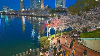 [4K HDR] Seoul Cherry Blossoms 2021 Night Walk Seokchon Lake and Food Alley 서울 석촌호수공원의 밤산책 나들이 서울워커