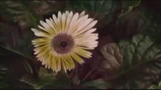 Ганнибал   Цвет ночи