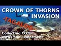 How to collect Crown of Thorns Starfish with the help of Pana Fishermen - Tagalog - COTS Philippines