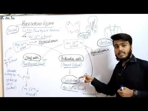 Endocrine Glands: Part IV-Para- Thyroid Gland Urdu/Hindi By Sir Dildar Ali