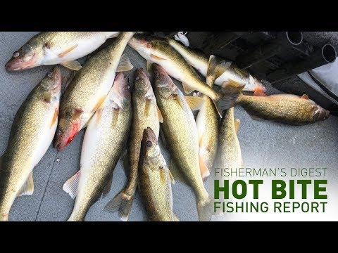 Fantasic Walleye Fishing In The Detroit Area! - Hot Bite Fishing Report - Nov 14th