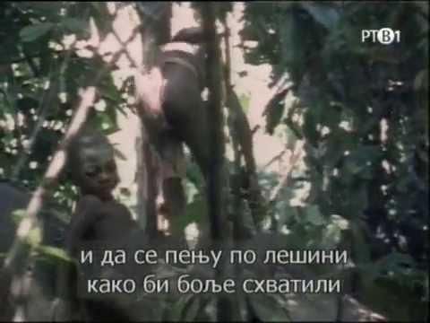Celebrations: Pygmies – hunting elephants (eng/ser)