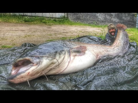 CATFISH MONSTER RECORD IN PARIS: 220 MTS X 85 KGS - HD By CATFISHING WORLD