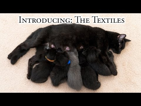 Introducing:  The Textiles!