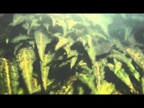 underwater shot of Crypt. uenoi