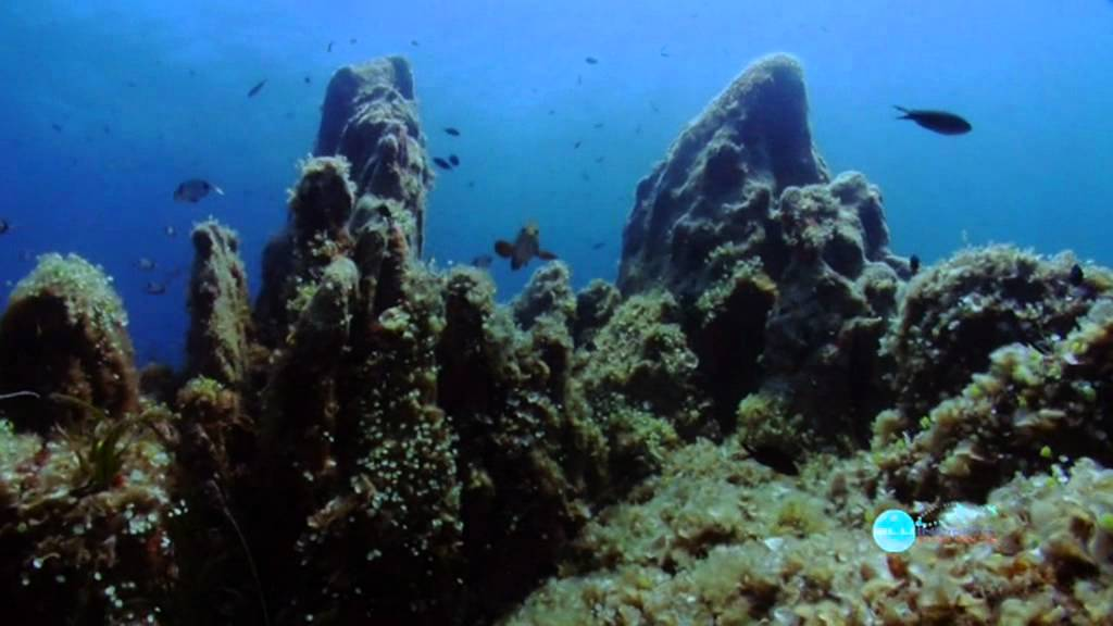 Blu infinito diving center presenta l 39 amp di tavolara e capo coda cavallo youtube - Dive center blu ...