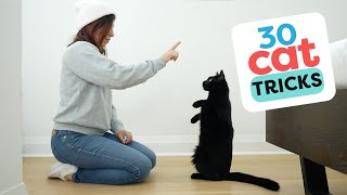 30 Tricks To Teach Your Cat