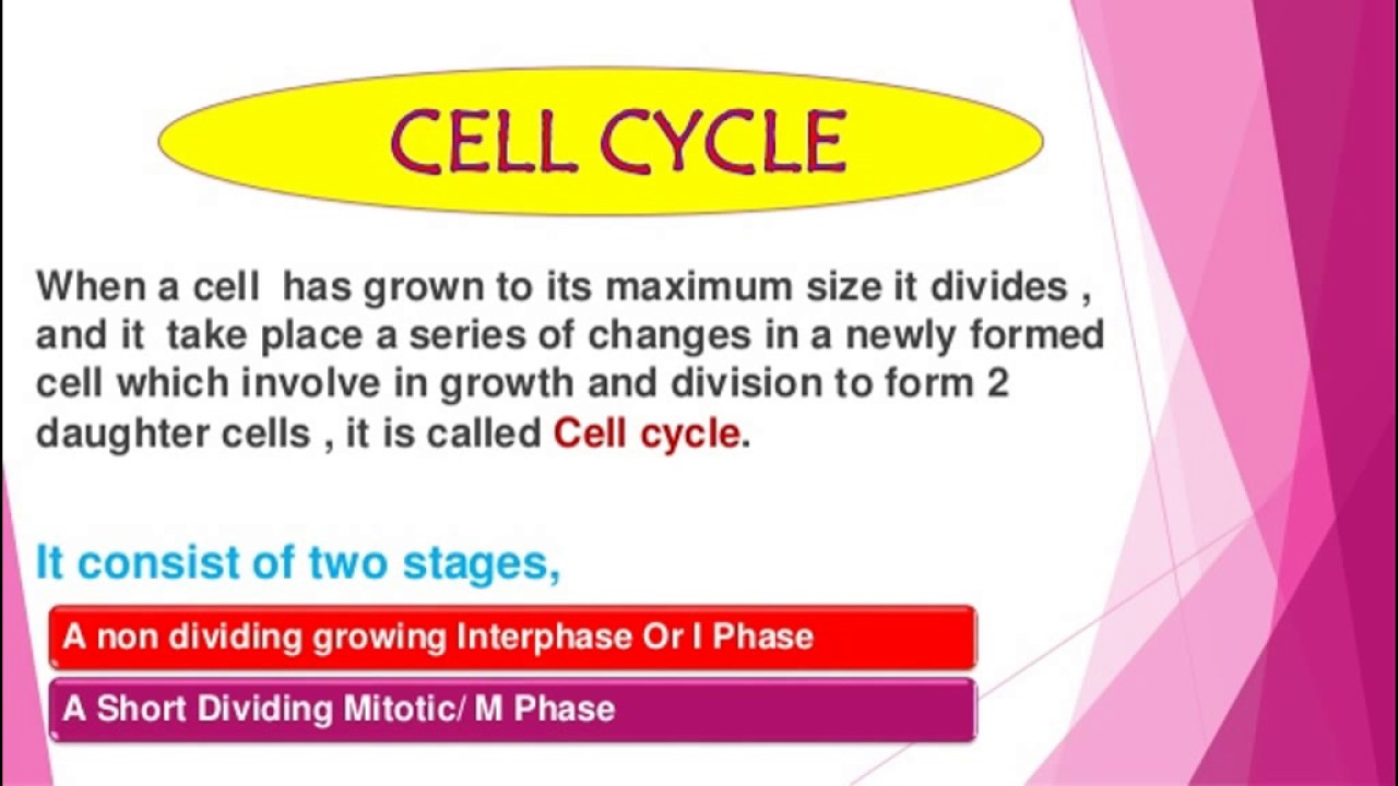 Cell cycle control ppt.