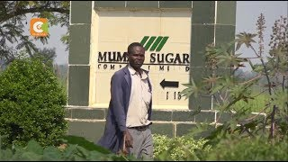 SPECIAL REPORT | Who killed Mumias Sugar?