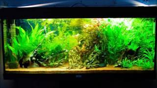 aquarium 240 L juwel