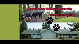 Doggie Daycare And Boarding Olympia Wa|precious Paws Daycare And Boarding Intro