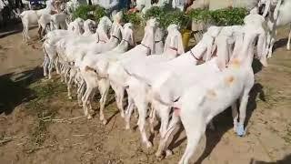 Rajanpuri