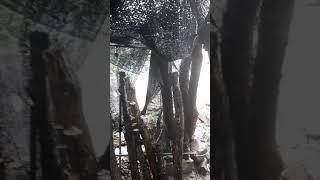 버섯나무에 물 주는 버…