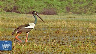 Keoladeo Ghana National Park - Part 1