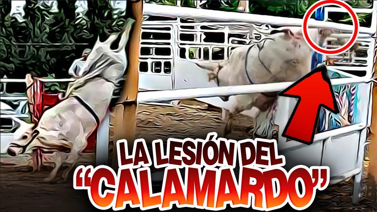 ¡¡¡La Lesión Del Toro Calamardo Por Que No Se Hizo La Revancha Con Hueso Vazquez!!!