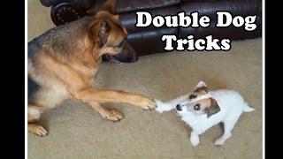 Amazing Double Dog Tricks by Jesse and Kaine