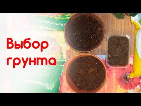 Как выбрать грунт для рассады и комнатных цветов
