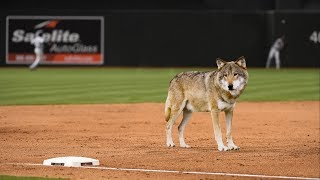Should The MLB Ban Infield Shapeshifting?