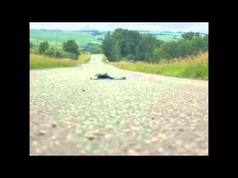 DEAD SKUNK IN THE MIDDLE OF THE ROAD - LOUDON...