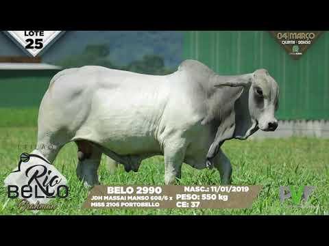 LOTE 25   BELO 2990