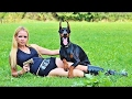 Doberman Aristocrat Guardian - Behavior Facts [Mr Friend]