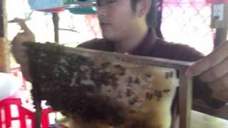 Honey Bees in Vietnam