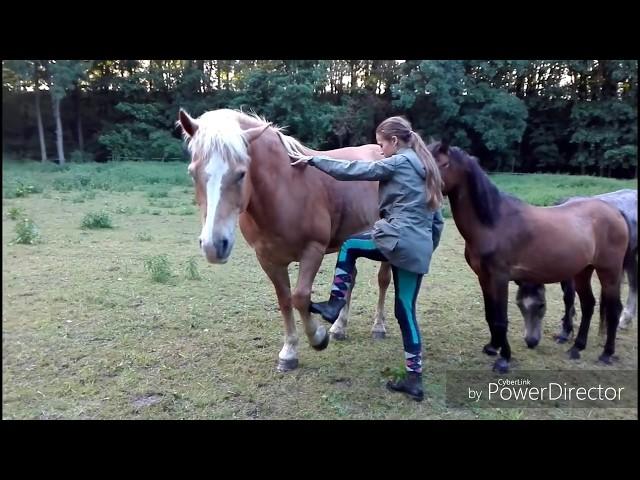 Začátečník vs. Pokročilý u koní