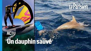 Un wing surfer sauve une maman dauphin piégée par une bouée en plastique