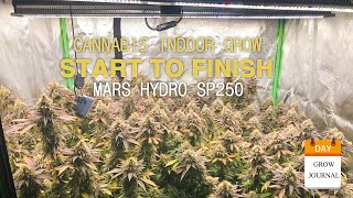 Cannabis Indoor Grow from Seed to Harvest - Mars Hydro SP 250 LED Grow Light - Grapefruit Diesel