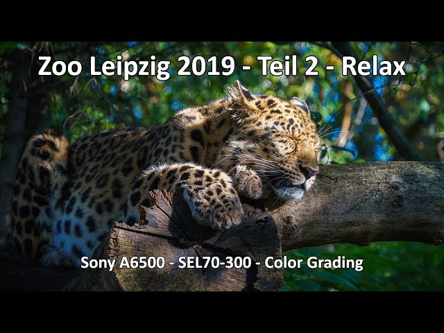 Unterwegs im Zoo Leipzig - Teil 2 2019 - Sony A6500 SEL70-300 - Chillout