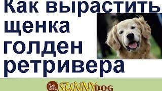 видео Собака не  ест или плохо ест,  только что то вкусное