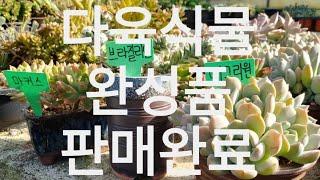 #78 다육식물 완성품…