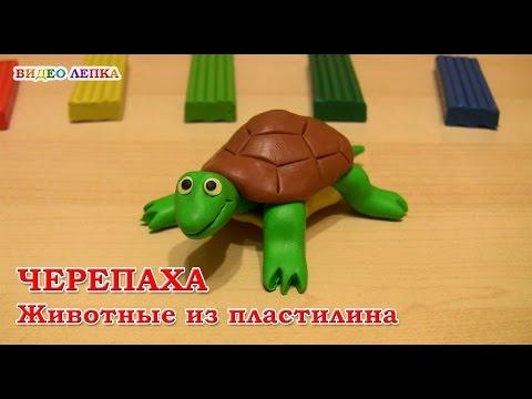Как слепить из пластилина черепаху