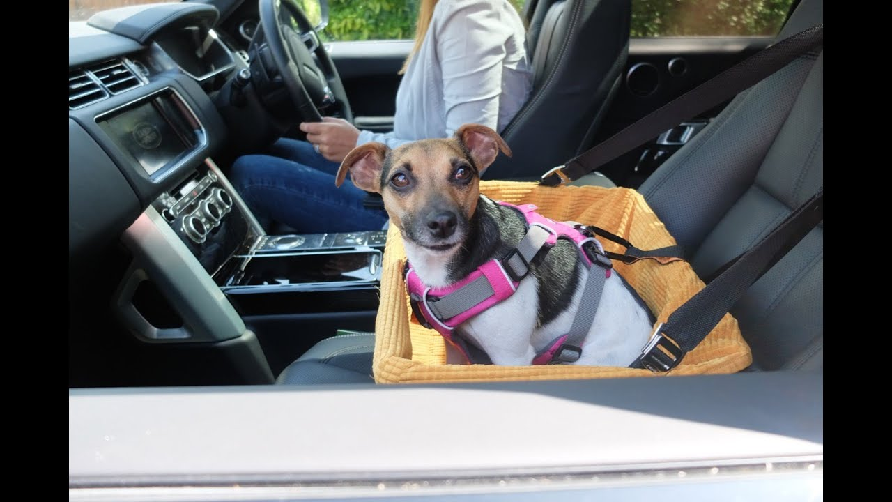 Dog Car Booster Seat Tutorial - The safest way to travel - YouTube