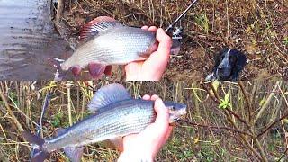 Осенняя рыбалка Один в глухой тайге Хариус Бешеный клёв Ловля на спиннинг Изба Часть 1