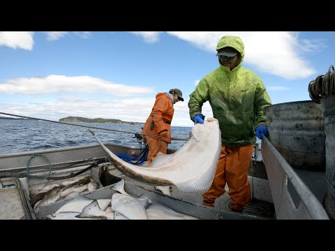 Setting And Hauling Halibut Longline - Alaska Commercial Fishing