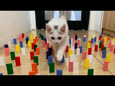 Cats Vs Domino