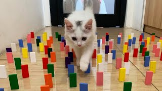 Cats Vs Domino Obstacle Challenge