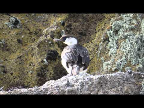 2012 Antarctica Episode 11 Deception island part1