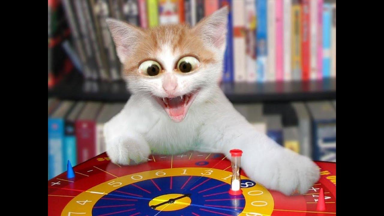 قطط مضحكة جدا 2016 اضحك من قلبك حتى البكاء أتحداك  humorous cats compilation