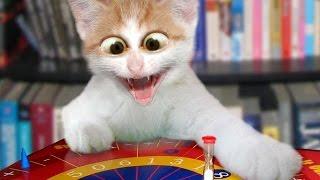 قطط مضحكة جدا 2016 اضحك من قلبك حتى البكاء أتحداك  funny cats compilation